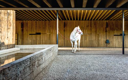 Bauten für Pferde (AIT 07/08 | 2015)